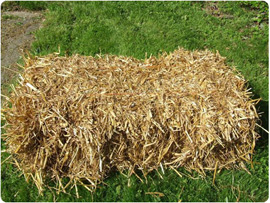 Straw Bedding for Horses