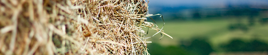 Hay for Sale 2017