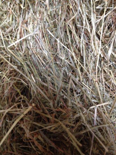 Small Bale Devon Meadow Hay