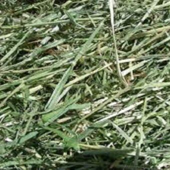 rye-hay-loose